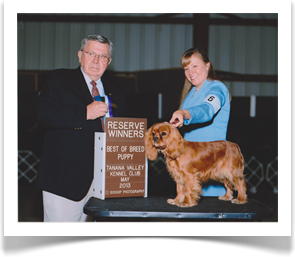 Savanna takes Best of Breed Puppy
